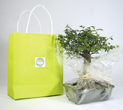 Bonsai en sac kraft ecologique publicitaire ECO115