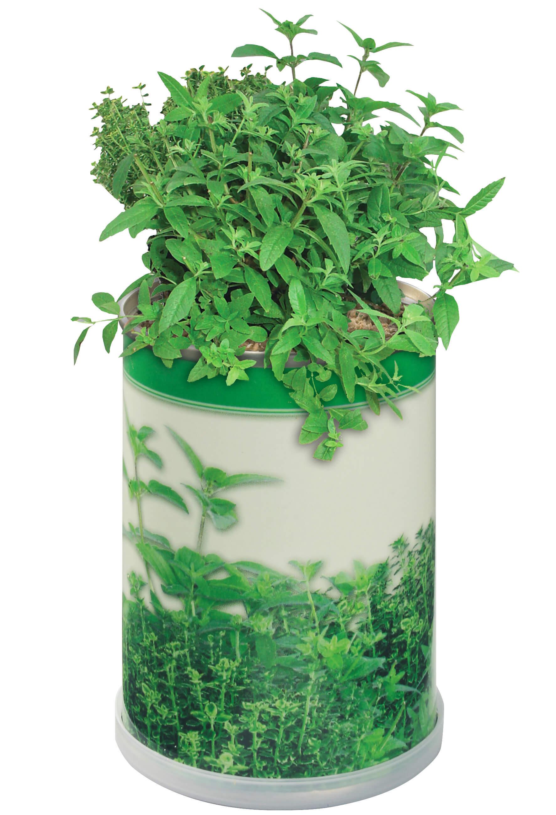 Canette florale ecologique publicitaire ECO058