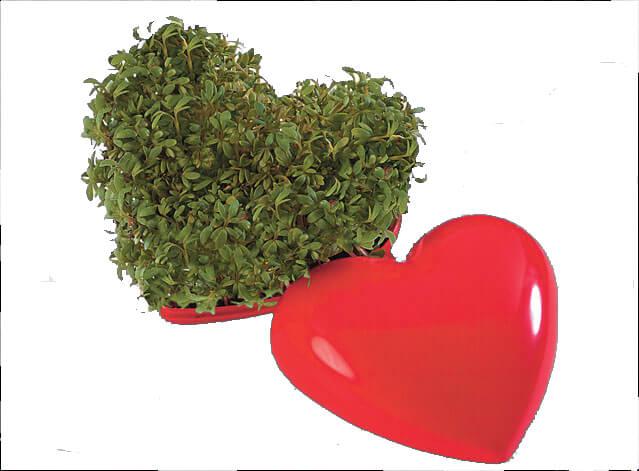 Cœur de verdure publicitaire ecologique ECO075