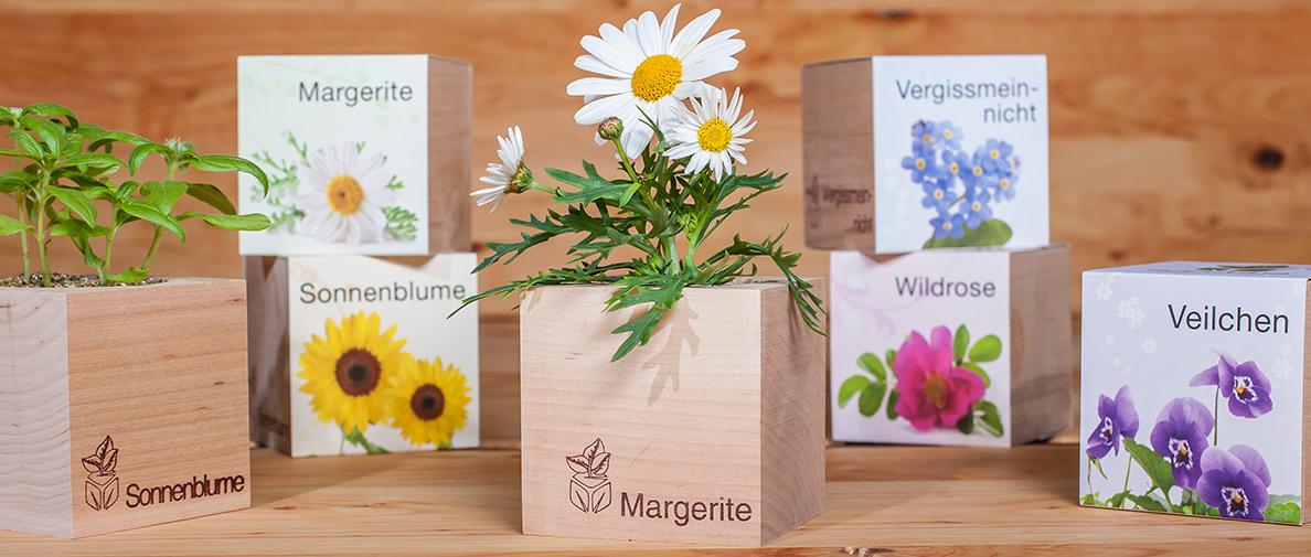 Cube ecologique publicitaire en fleurs ECO077