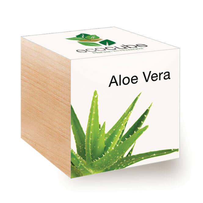 Cube ecologique publicitaire exotique ECO079