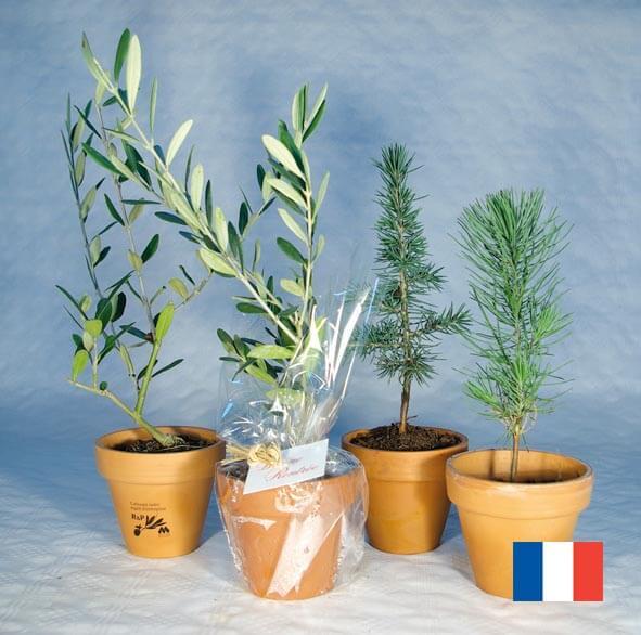 Plant d'arbre en pot terre cuite ecologique publicitaire ECO107