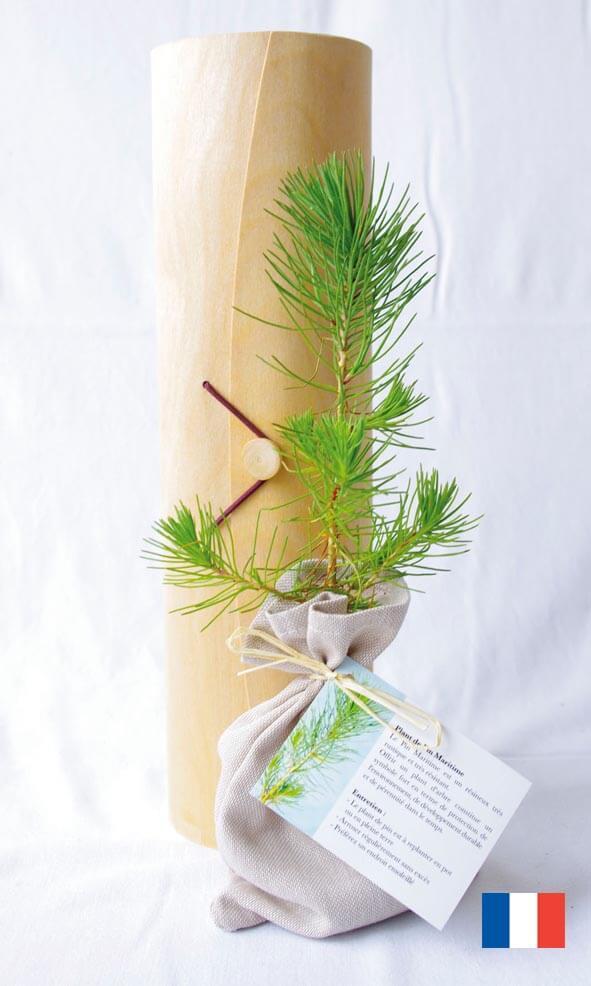Le plant d'arbre en tube bois ecologique publicitaire ECO110