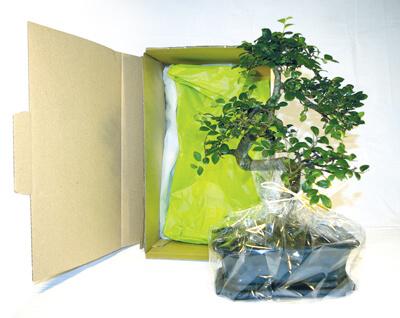 Bonsai en carton individuel ecologique publicitaire ECO114