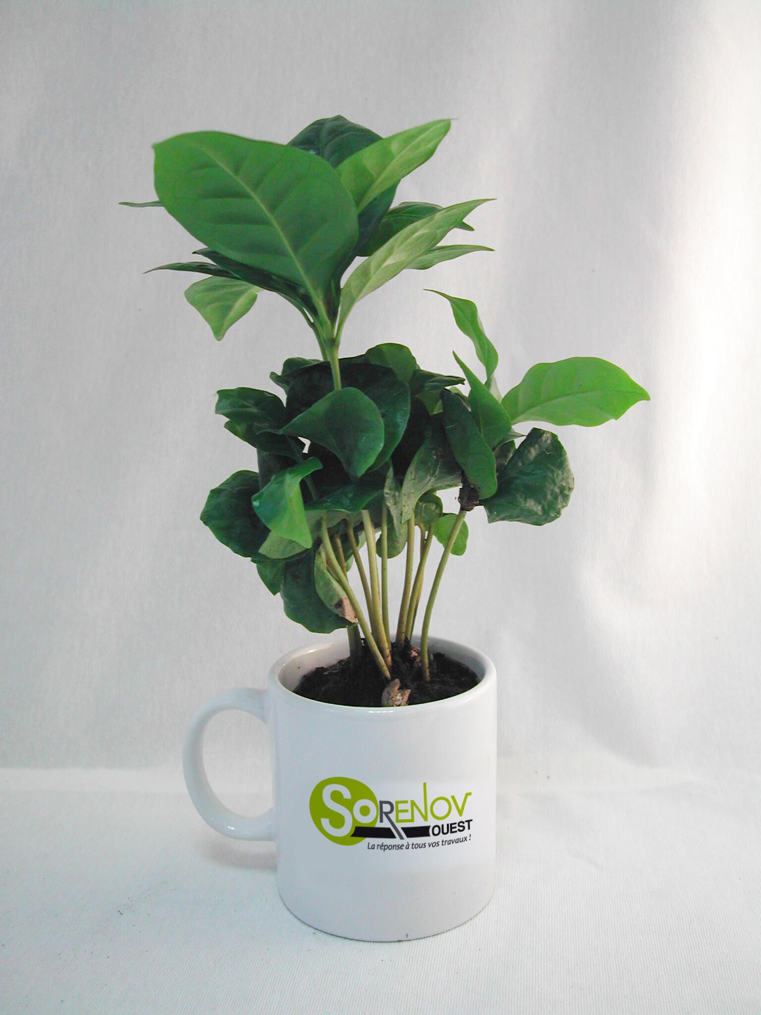 Cafeier en mug ecologique publicitaire ECO117
