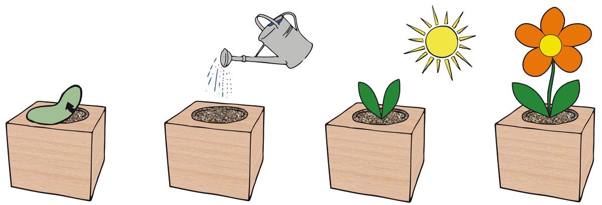 Cube ecologique publicitaire - herbes et aromates ECO078