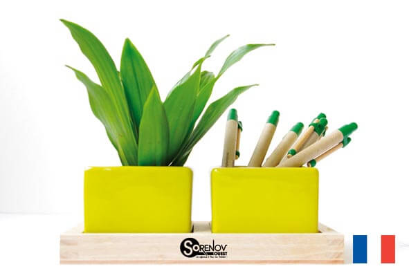 plante publicitaire bureau