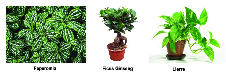 plantes faciles dentretien bureau